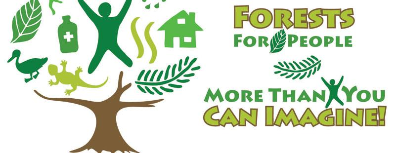 The International Year of Forests, 2011